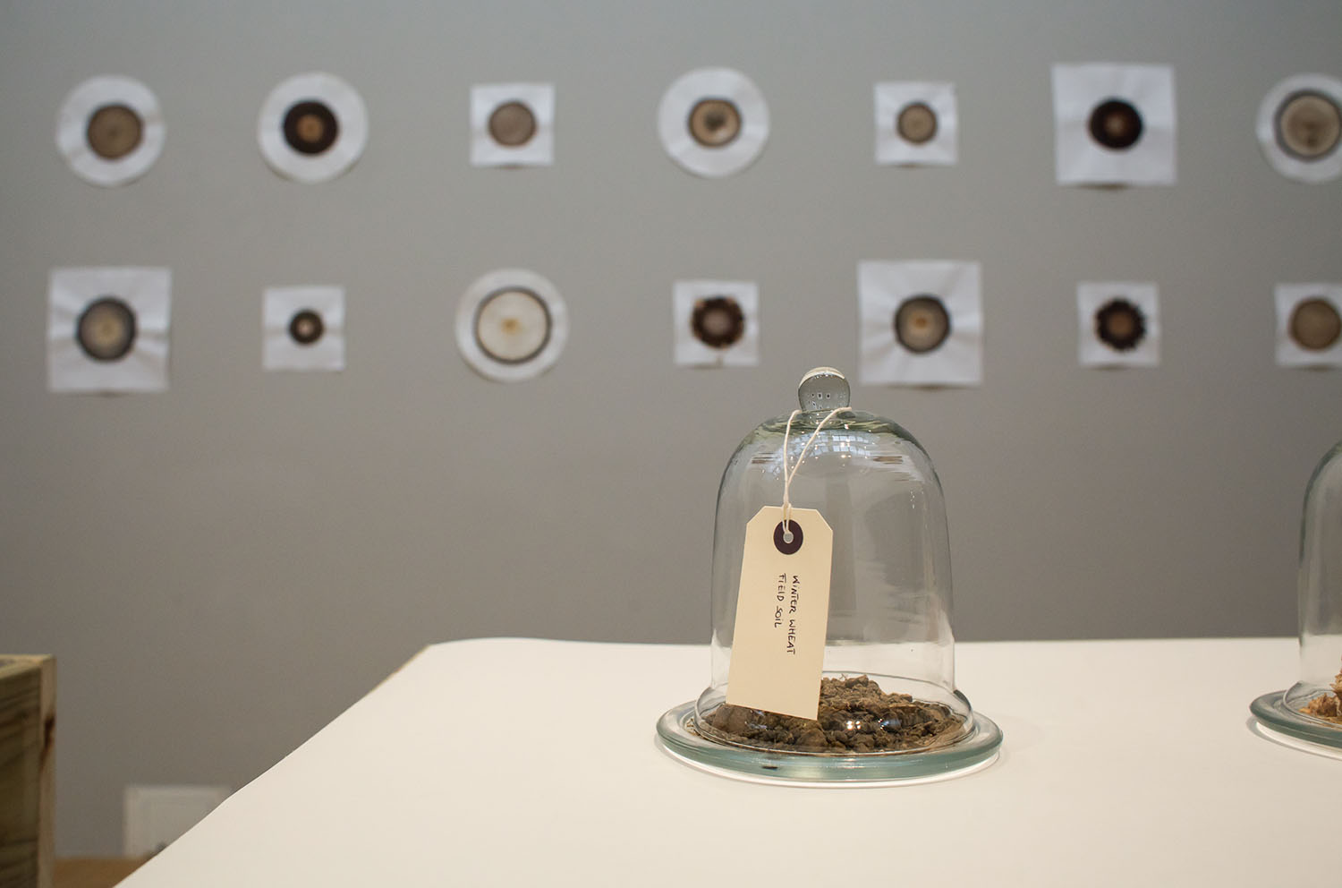 Claire Pentecost, Our Bodies, Our Soils, 2013–15. Installation. Courtesy of the artist.