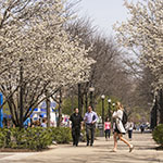 Students help DePaul earn 'Tree Campus USA' recognition