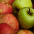 Apple tasting with Cézanne opens DePaul University Humanities Center season