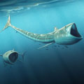 Fossil discovery: Extraordinary 'big-mouthed' fish from Cretaceous Period