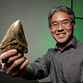 ​Paleobiologist clarifies scientific record of the size of extinct megatooth shark