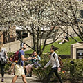 Students help DePaul University earn 'Tree Campus USA' recognition; plan Earth Week activities