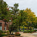 Arbor Day Foundation honors DePaul University with 2019 Tree Campus USA recognition